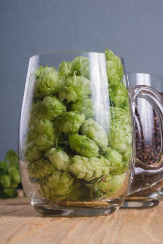 Зачем добавлять хмель в пиво?