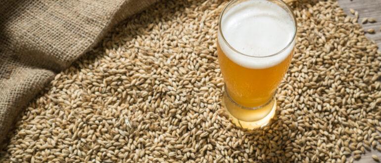Что такое солод для пива? Всё, что вам нужно знать!
